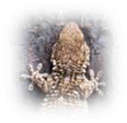 Un blog de Ciencias Naturales del IES Benjam�n Jarn�s (profesor: Fernando Pati�o)