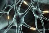 La memoria RAM del cerebro funciona como una cámara de alta resolución