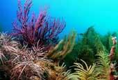 """El """"Stress"""" de los corales"""